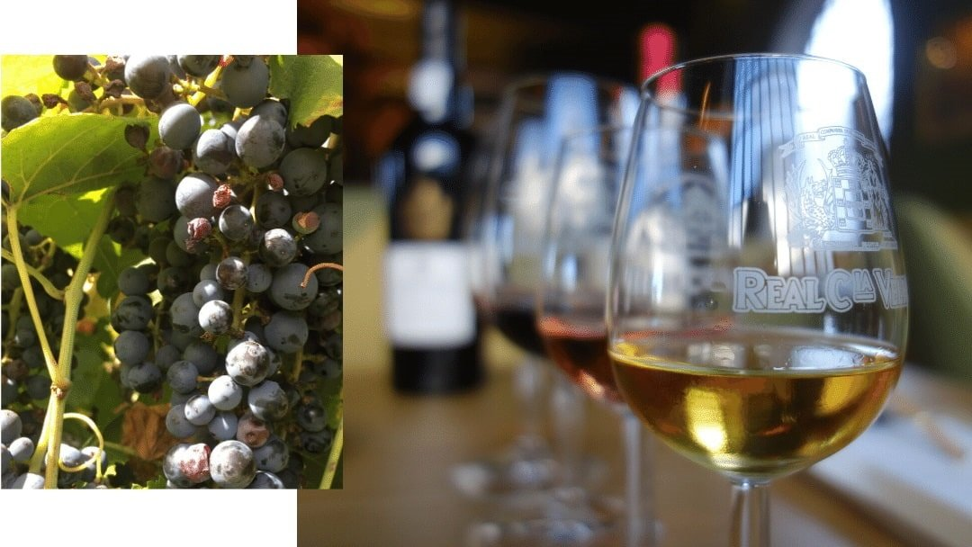 wines and grapes of Portugal