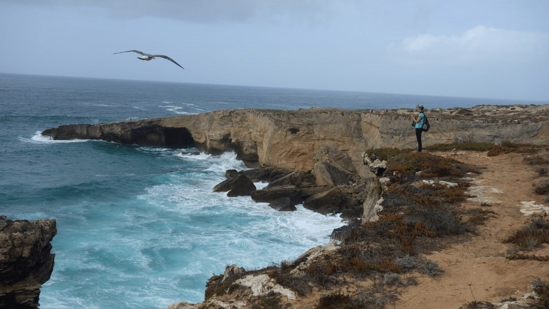 woman on seaside cliff with seagull soaring nearby