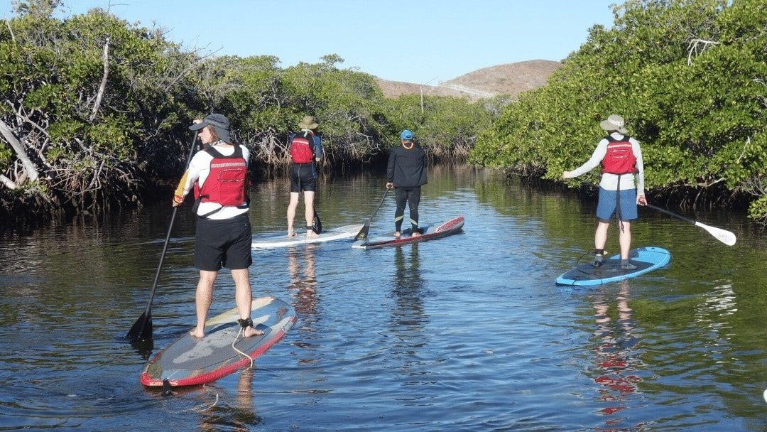 persons on stand up paddleboards in Baja Mexico