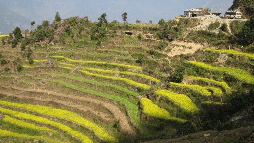 green terraced fields in Nepal