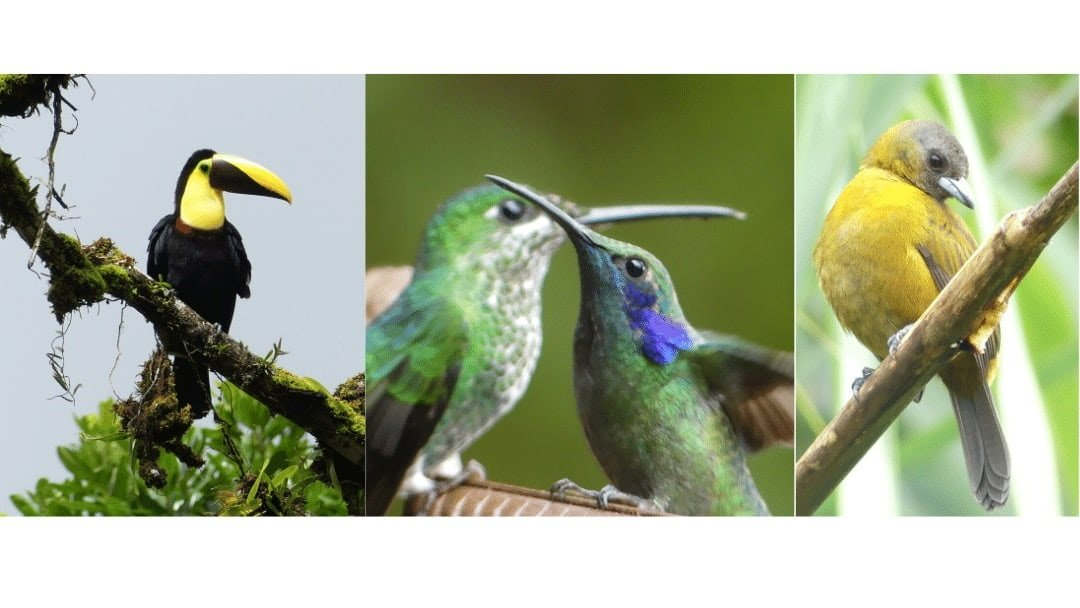 composit of three bird images containing a total of 4 colorful tropical birds