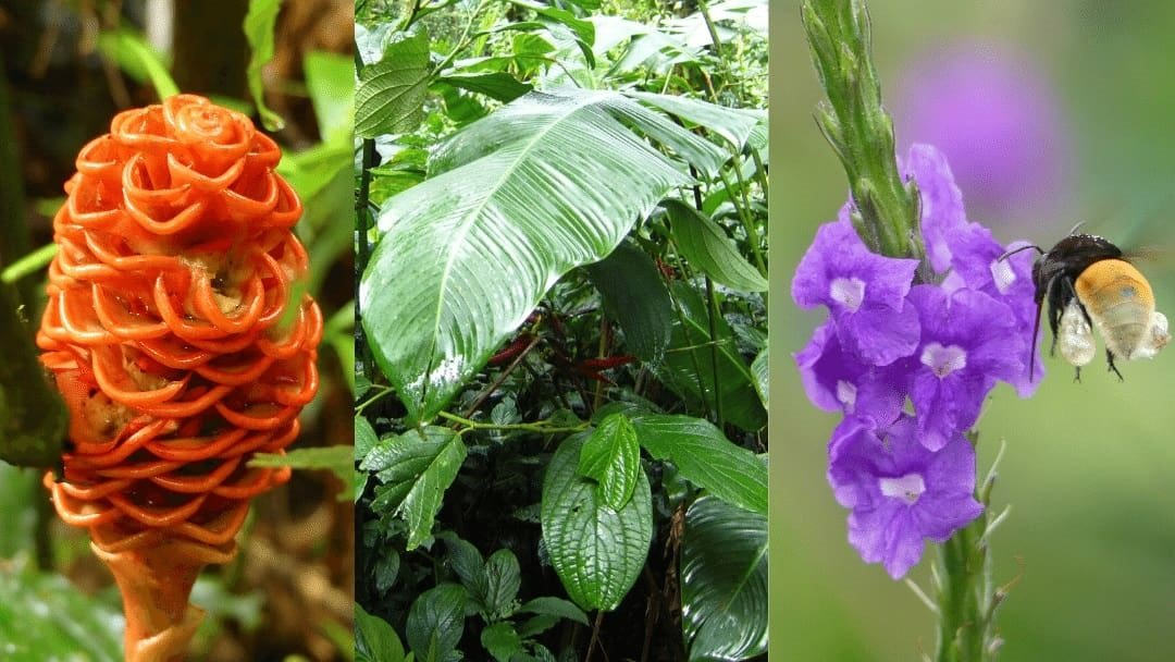Various flowers and plants of Costa Rica