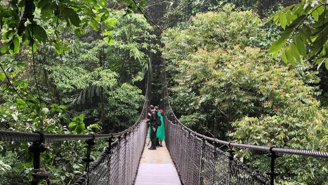 Hanging bridges through the canopy in Costa Rica