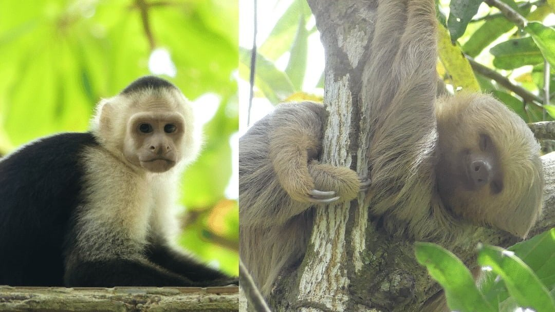 monkey and sloth in Costa Rica