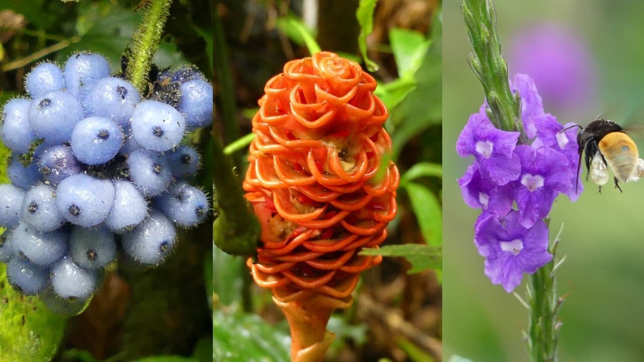 composite of three different brightly colored tropical flowers