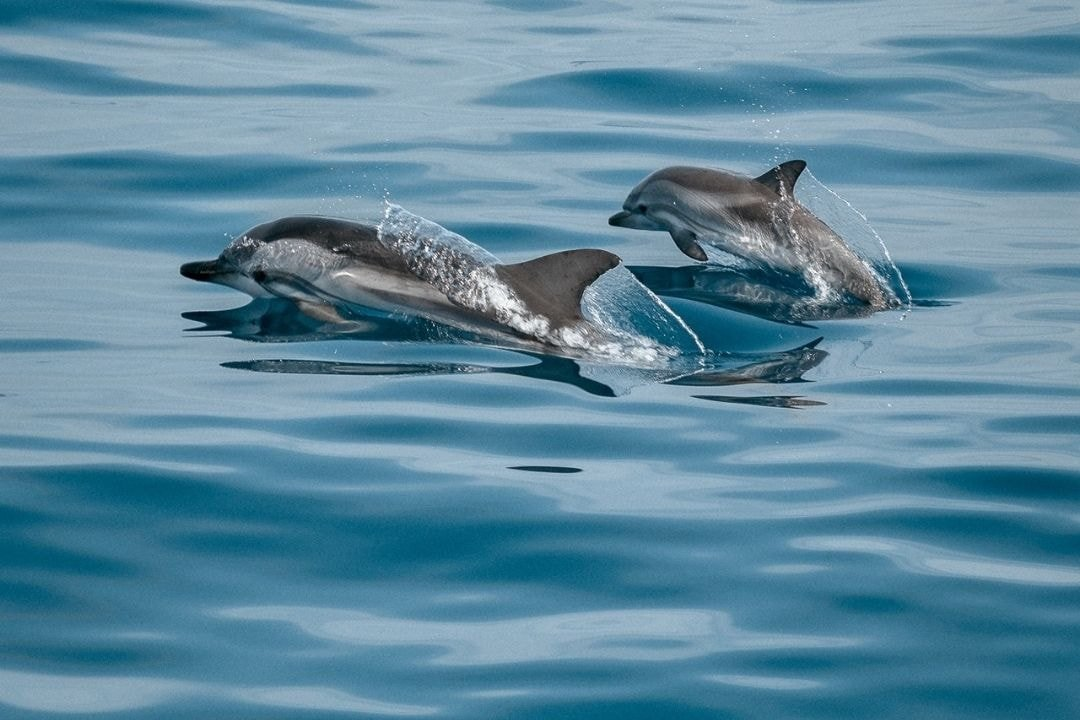 momma and baby dolphin jumping out of water