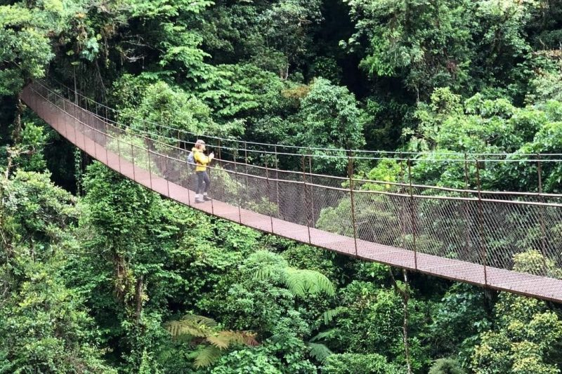 person on a long Hanging Bridge in jungle