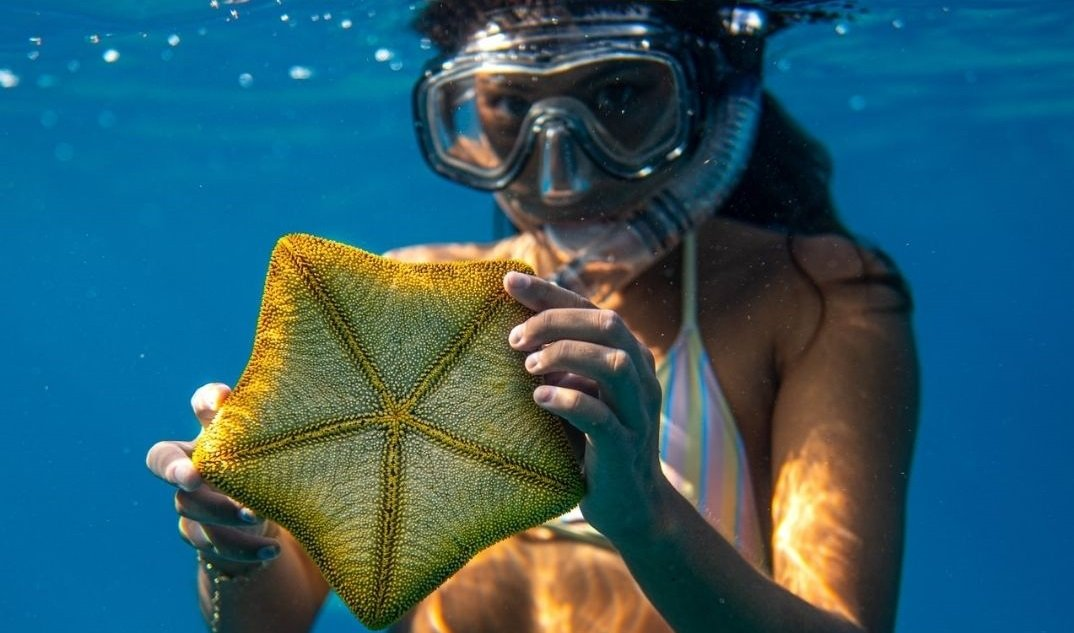 young girl snorkeling holding starfish