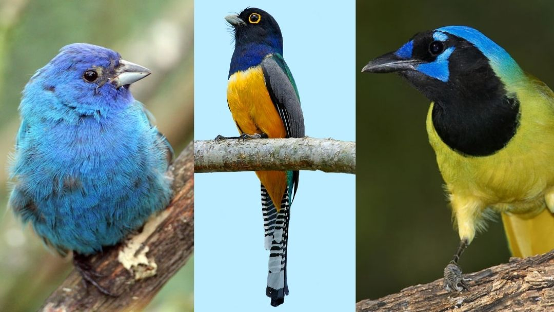 three brightly colored tropical birds