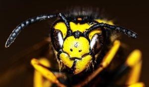 close up of hornet