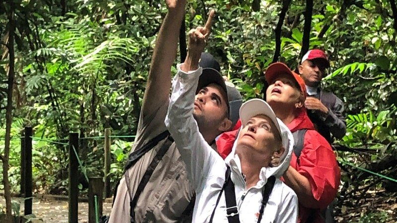 4 people pointing upwards into the jungle canopy