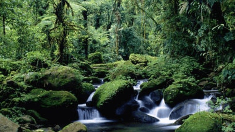 lush forest with large moss-cevered boulders and small waterfalls